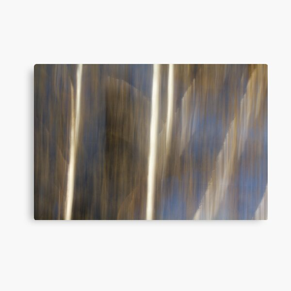Daylight Birch Canvas Print