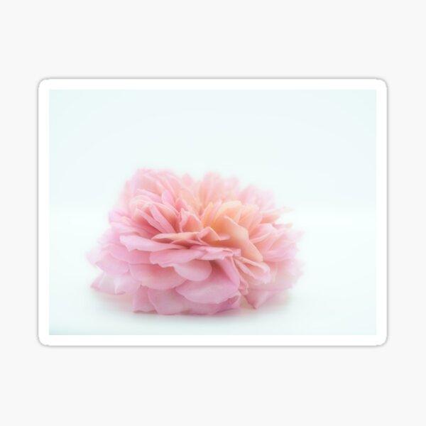 A Gentle English Rose No.1 Sticker