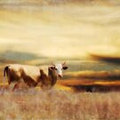 Alone in the Field 2 by Pat Moore