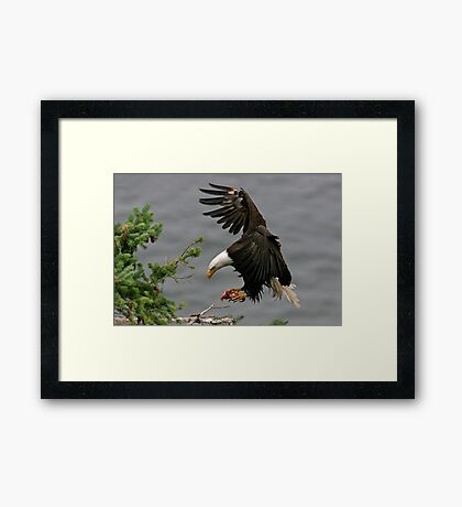 Home With The Catch 3 Framed Print