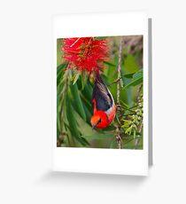 SC ~ WO ~ HONEYEATER ~ Scarlet Honeyeater by David Irwin 261019 Greeting Card