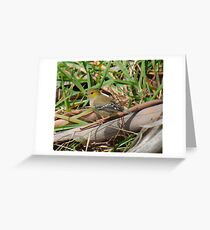 PARDALOTE ~ WO ~ Forty-spotted Pardalote by David Irwin 261019 Greeting Card