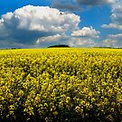 Yellow Field by Derek Donnelly