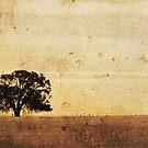 lone she-oak by bally58