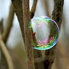 Bud In a Bubble by Lynn  Gibbons