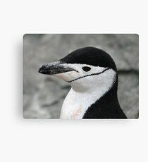 Chinstrap penguin 2 Canvas Print