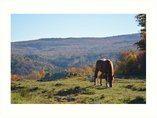 Horse in the Fall Mountains by Veronica997