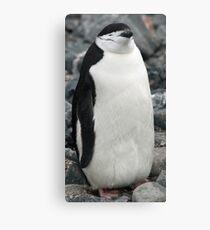 Chinstrap penguin 3 Canvas Print