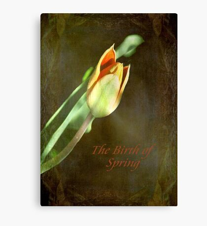 A New Spring © Canvas Print