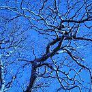 Frozen tree by Annabelle Ward