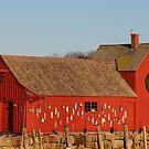 Motif #1 Holiday - Rockport, Massachusetts by Steve Borichevsky