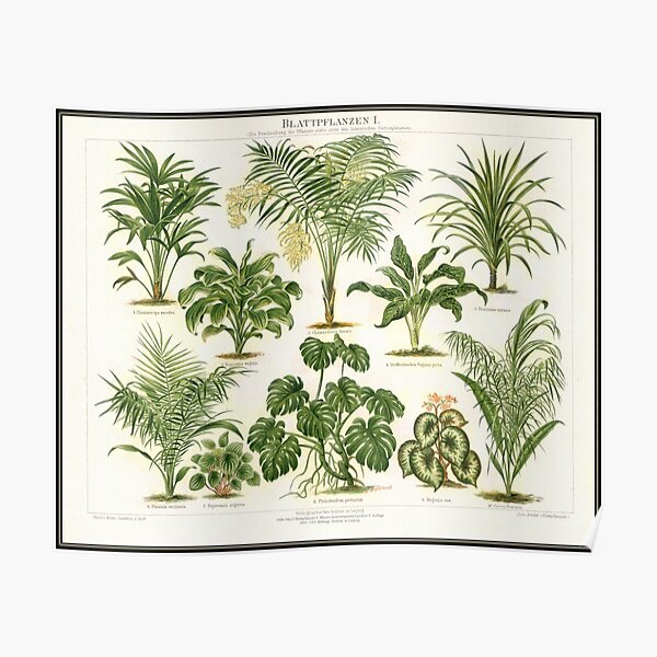 Vintage tropical plants Poster