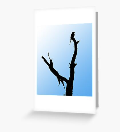 Lilac Breasted Roller Silhoette Greeting Card