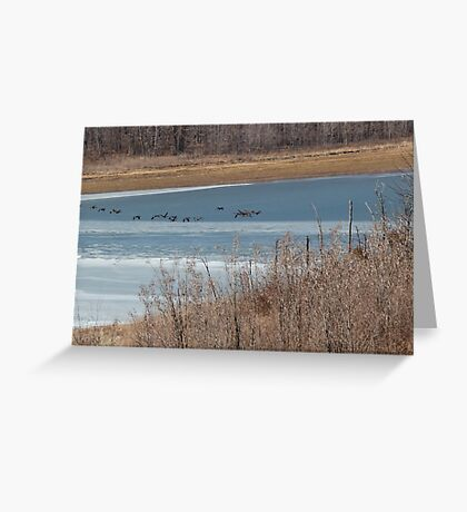 ice flutter Greeting Card