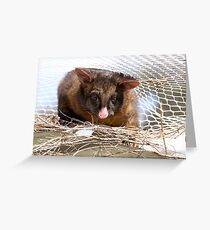 An uninvited guest at the Wildlife Rescue  Greeting Card