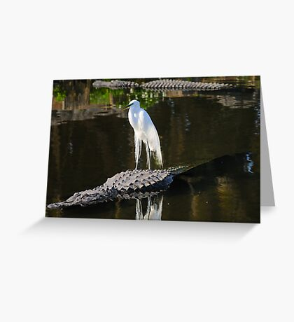 Alligator Rodeo Greeting Card