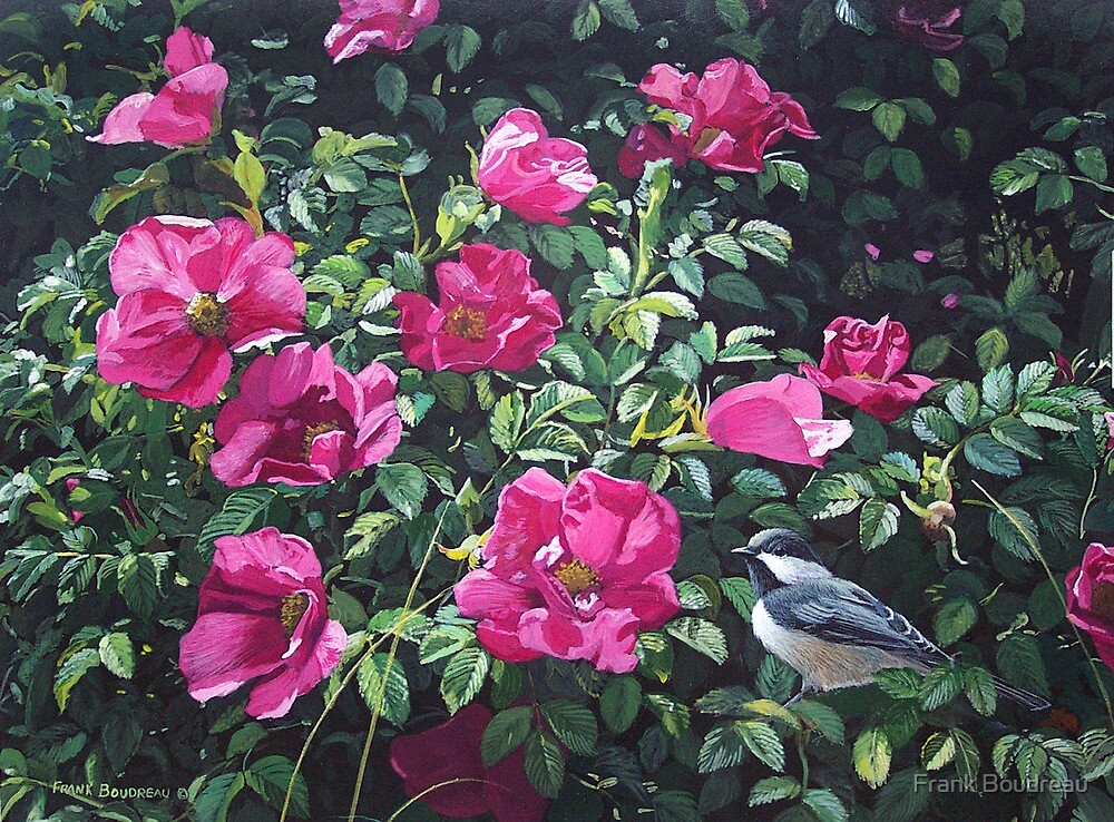 """""""Among The Roses--Blackcapped Chickadee"""" by Frank Boudreau"""
