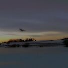 Fly Over at Sunset by Judi Taylor