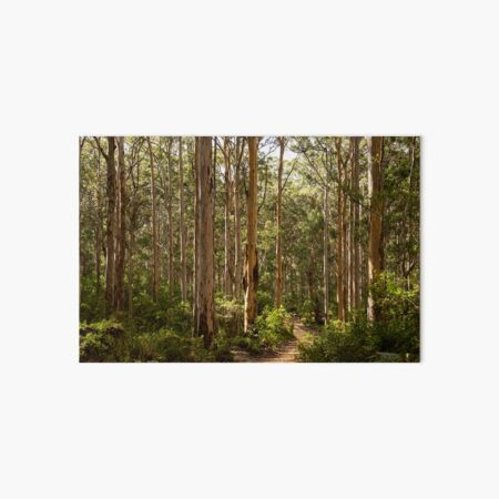 Boranup Forest, Western Australia Art Board Print