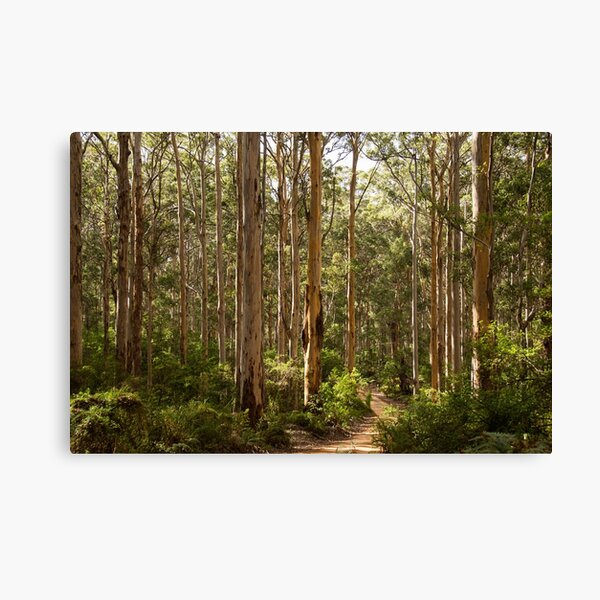 Boranup Forest, Western Australia Canvas Print