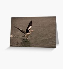 Pelican Launch Greeting Card