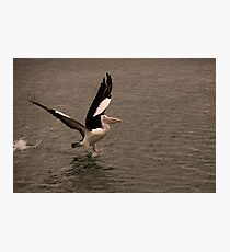 Pelican Launch Photographic Print