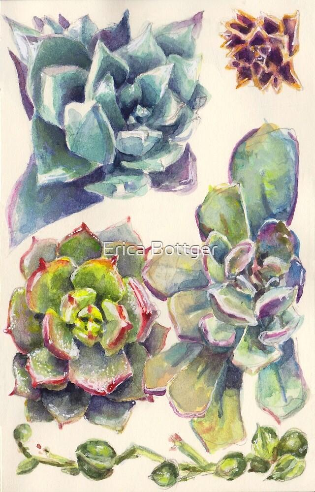 Summer Succulents by Erica Bottger