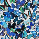 """Blue Butterflies"" by carrysmith"