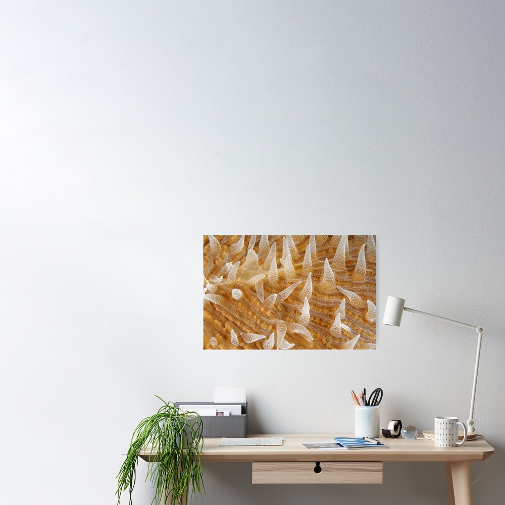 Fungiid Macro Poster