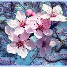 Cherry blossoms  by NadineMay
