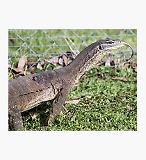 Dragon with forked tongue. Photographic Print