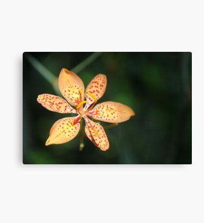 Dunno Flower Canvas Print