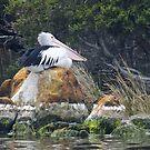 BIRDS AND ANIMALS by Karen Stackpole