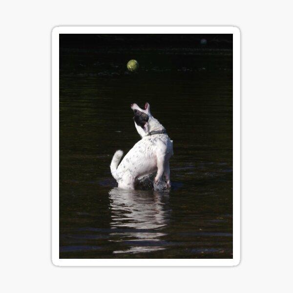 Jack Russel catching ball in water Sticker