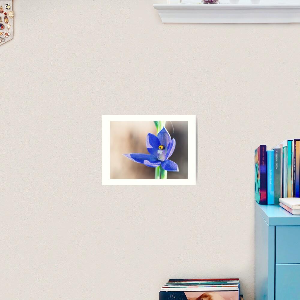 Granite Sun Orchid Art Print