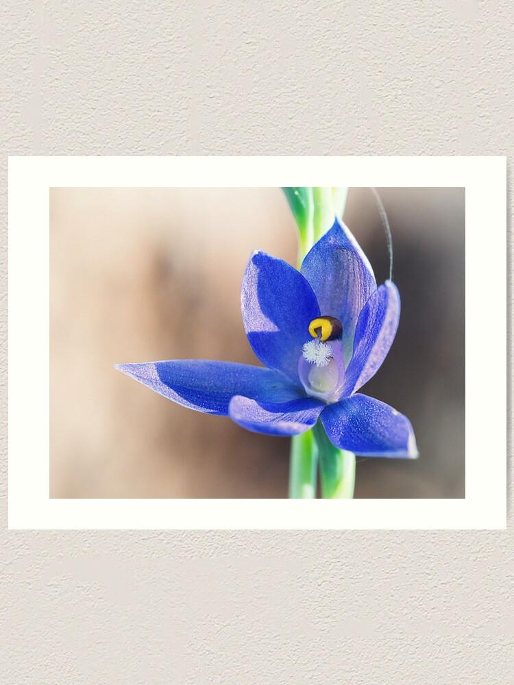 Alternate view of Granite Sun Orchid Art Print