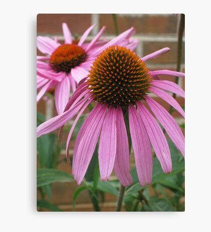 Pink Flower - Mars Hill, N.C. Canvas Print