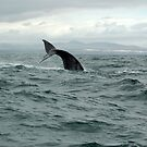 waving whale by shaft77