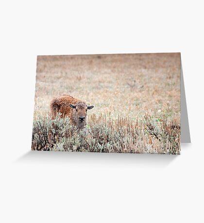 Sad Calf In The Freezing Rain Greeting Card