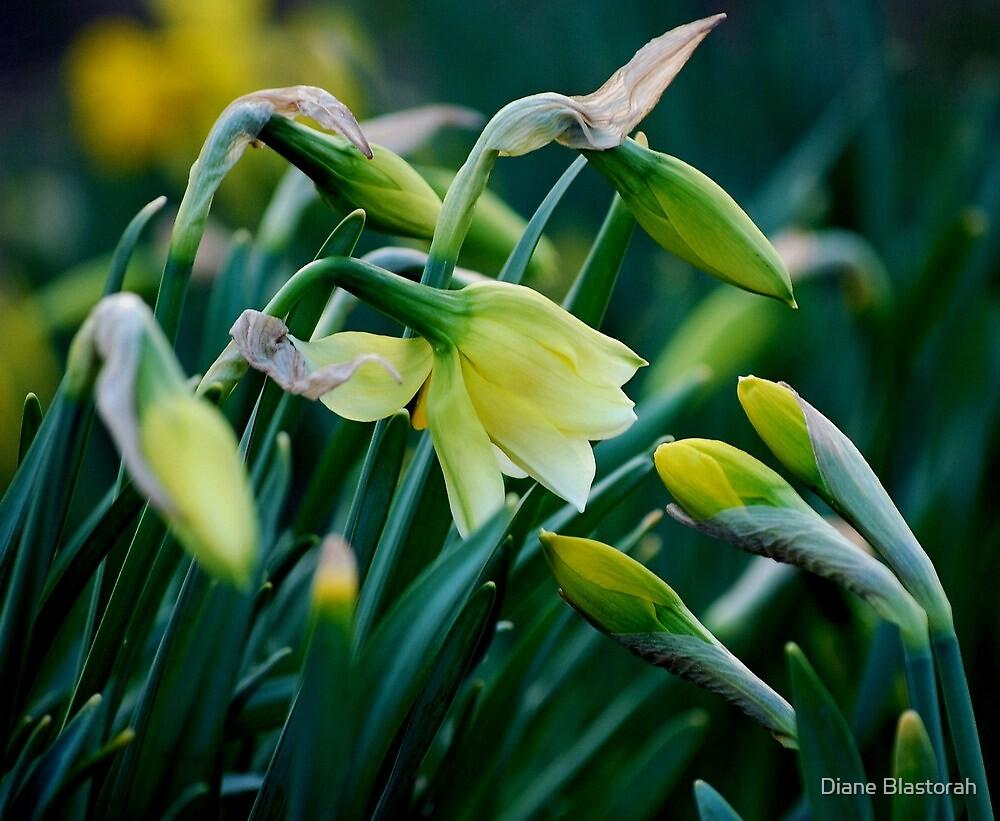 As Friendships Bloom... by Diane Blastorah