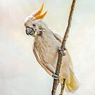 Sulphur Crested Cockatoo by Brian Tarr