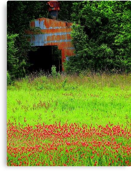 Rustic Country by Dawn di Donato