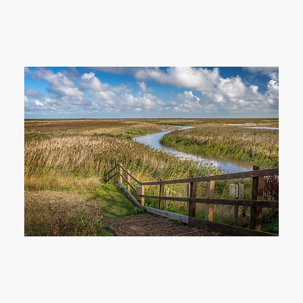 Norfolk Reed Photographic Print