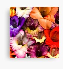 Colorful Gladiolas Canvas Print