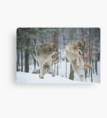 Dances With Wolves Canvas Print