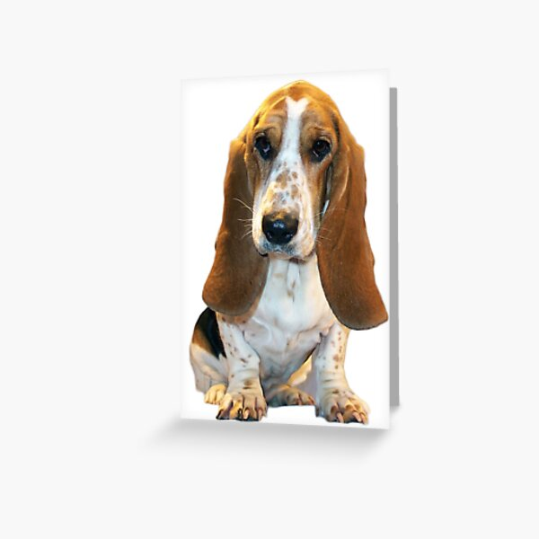 Cute Basset Greeting Card