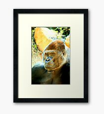 What a Handsome Fellow Framed Print
