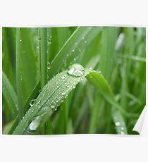 Renewing Rain Poster