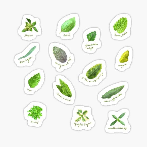 Kitchen garden herbs sticker pack Sticker