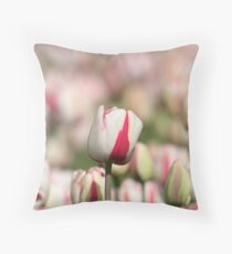 White and pink colored tulips Throw Pillow